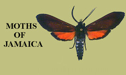 MOTHS OF JAMAICA